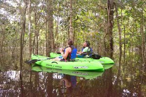 Kayaking in the Amazon flooded forest from the Motor Yacht Tucano