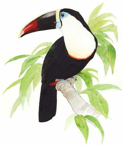 White Throated Tucan Drawing on Motor Yacht Tucano