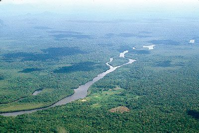 Deep forest tributary explored by cruises on the Motor Yacht Tucano.
