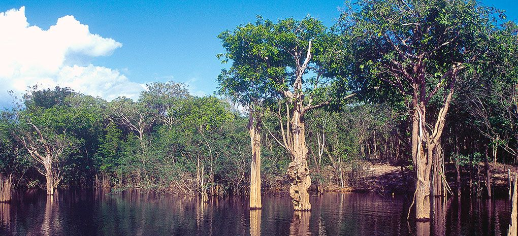 Igapo flooded forest, Amazon River Cruise & Rainforest Expedition Tour
