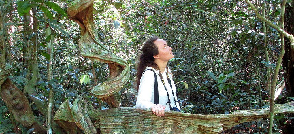 Strangler Fig Amazon Rainforest