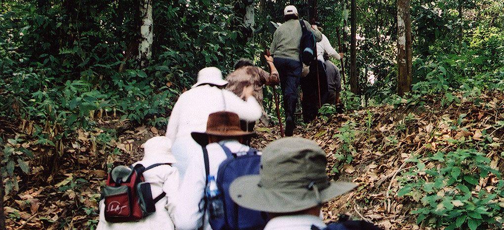 Amazon Rainforest Walk