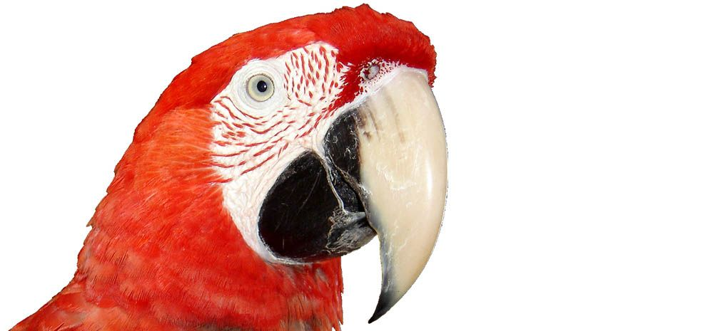 Red and Green Macaw on MY Tucano Amazon River Cruise and Rainforest Expedition Tour