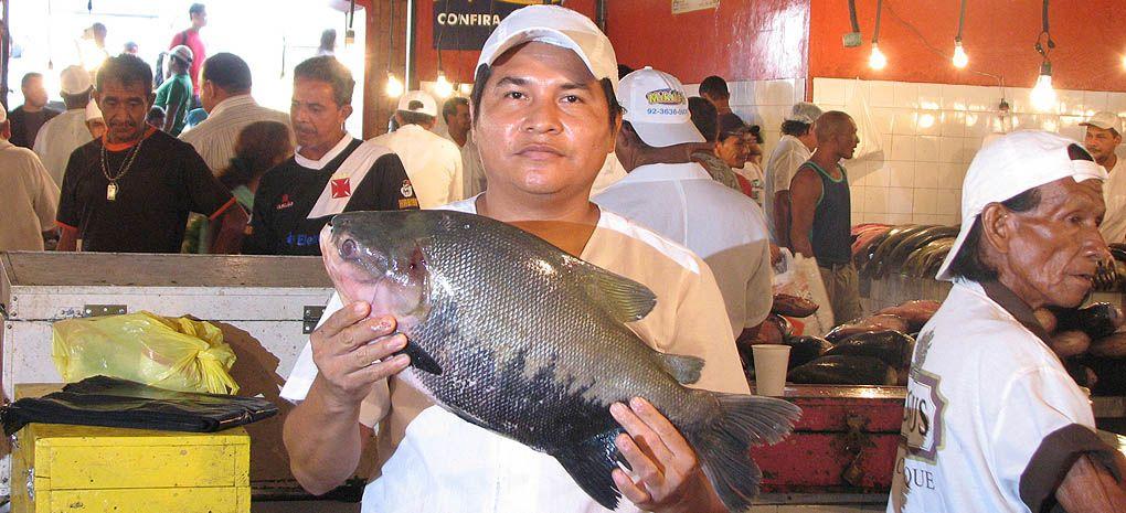 Fish Market in the Amazon Jungle